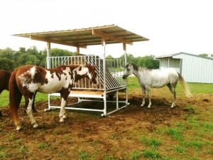 HorseFeeder1