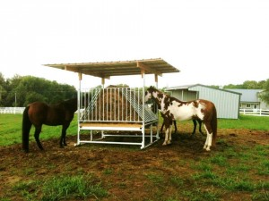 HorseFeeder2