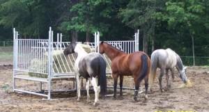 Klene Pipe H-12 Horse Hay Feeder in Use