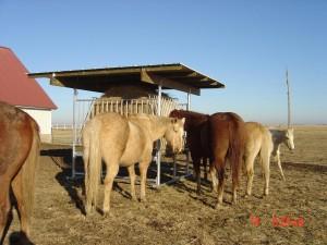 Klene Pipe's H-8 Horse Hay Feeder