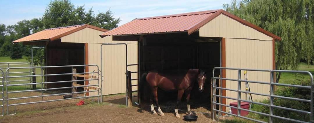 Wrangler Run in Horse Shelter in the Summer