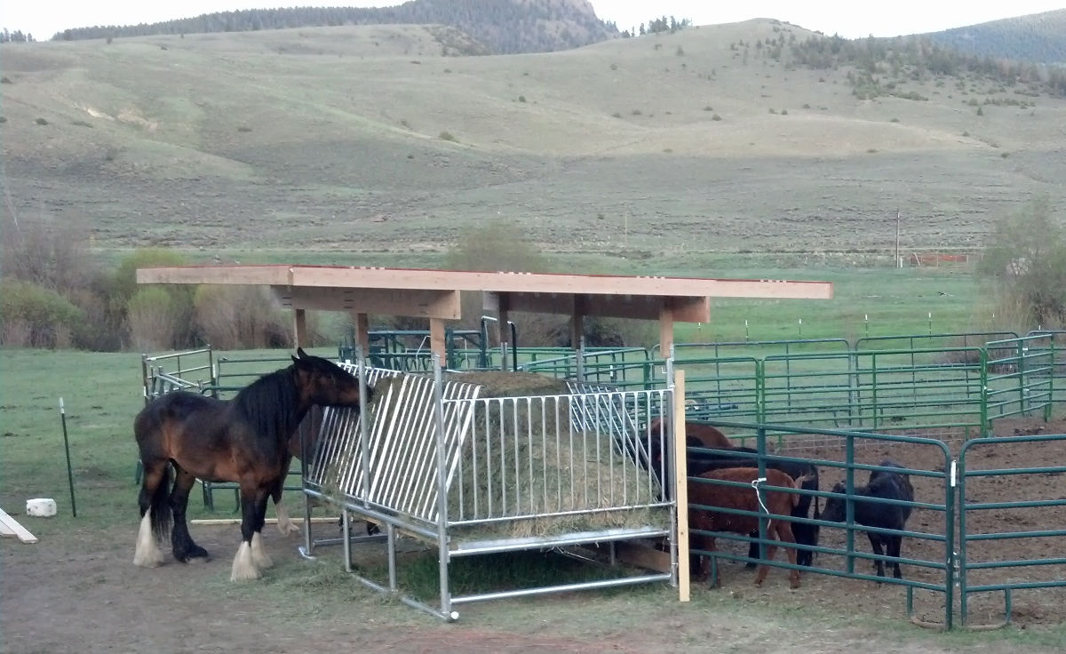 H 12 Horse Hay Feeder Save Money Amp Time Klene Pipe