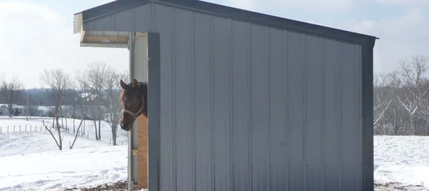 horse in horse shelter in winter