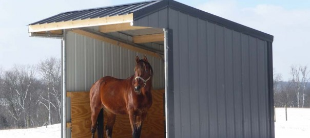 Run in Horse Shelter for Cold Weather Care