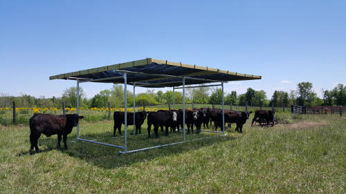 Portable Shade Structure