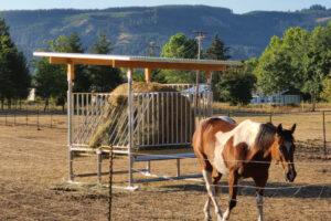 Horse with a Klene Pipe Hay Feeder